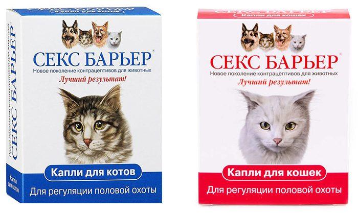 Как ликвидировать запах кошачьей мочи. Что это и как предотвратить его появление
