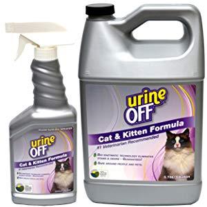 Как ликвидировать запах кошачьей мочи.