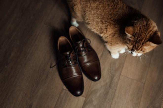избавиться-от-запаха-кошачьей-мочи (3)