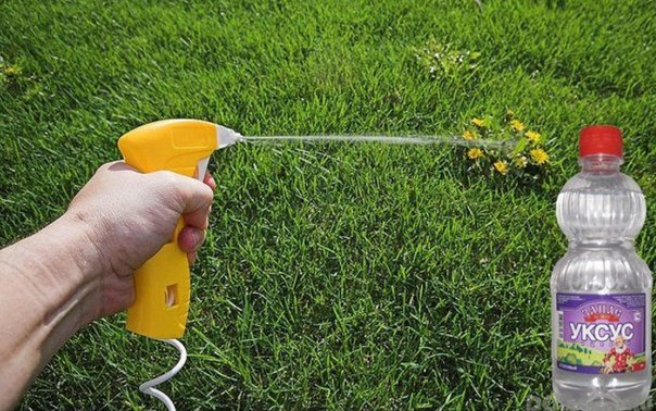 уксус поможет избавиться от сорняков